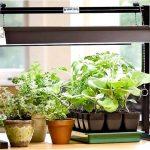Как выбрать светодиодные лампы для выращивания растений?